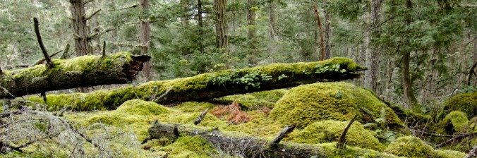 cropped-mossy_outcropping-header.jpg