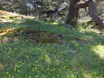 Camas and buttercups on the top of The Hill