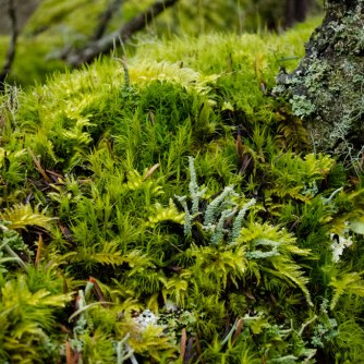 Lush gardens of mosses and lichens are a hallmark of Lopez Hill