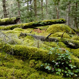 One of the Hill's many mossy outcroppings