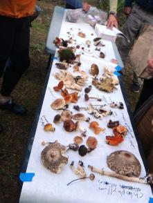 mushroom-banquet-table
